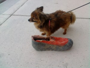 Dirty shoe with dog