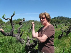 Story Winery, wines, vineyard, winemaking, winery, Zinfandel, Mission vines